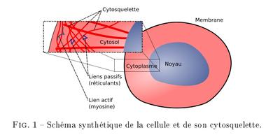 Cellules 2009