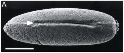 Drosophila 2011